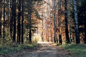 Catskill Mountains Forest Preserve Tipps