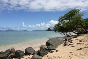 Direkt am Strand-Hotels in Oahu, Hawaii