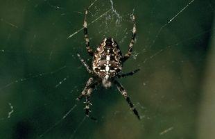 Wie Sie Spinnen aus einem Schiffshebewerk zu halten