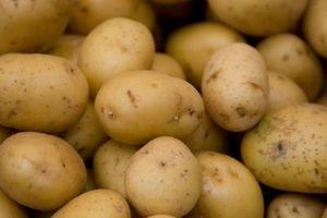 Können Sie ungekocht weiß Kartoffeln Einfrieren?