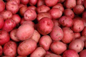 Über rote Kartoffeln