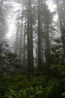 Planen Sie eine Reise nach Redwood National Forest