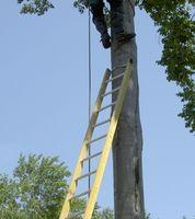 Wie ein Sicherheitsgurt an einem Baum Stand angefügt