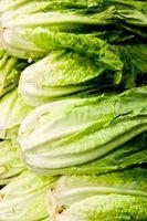 Stellen Sie eingelegter Salat?