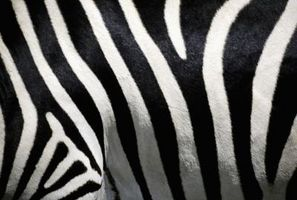 Gewusst wie: Cupcakes in ein Zebra Print dekorieren