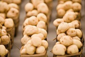 Klassifikationen der essbare Pilze