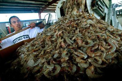 Techniken in Shrimping
