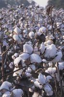Wie wird die Baumwolle hergestellt?