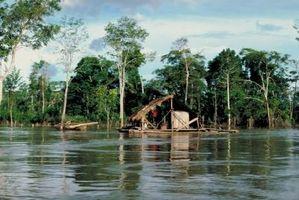 Wie man Guarana-Extrakt
