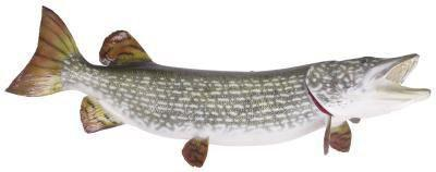 Gewusst wie: größere Fische zu fangen