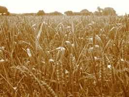 Nutrimill Weizen Grinder Anweisungen