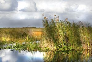 Hotels nahe Boggy Creek Airboat Rides in Kissimmee, Florida