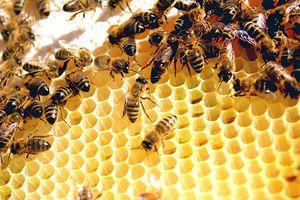 Unterschied zwischen Klee Honig & reiner Bienenhonig