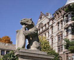 Top Colleges in New Jersey für Männer-Lacrosse