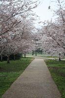 Liste der Sehenswürdigkeiten in Washington DC