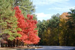 Führungen in North Carolina