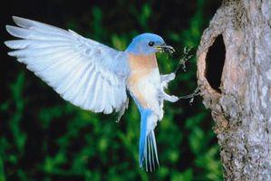 Vogel Fangen