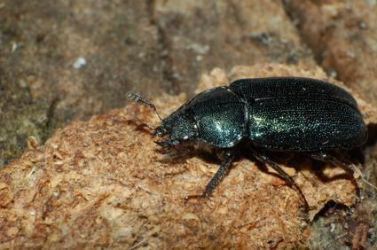 Fehler & Insekten im Regenwald