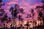 Wie Sie das perfekte Wochenende in Fort Myers, Florida zu verbringen