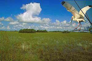 Fakten über den Everglades National Park