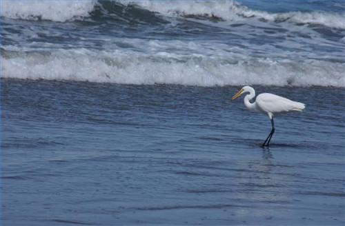 Eine Anleitung zum kalifornischen Big Sur