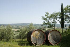 Weinberg-Touren in der Toskana