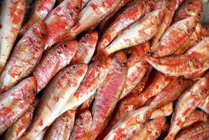 Gewusst wie: Meeräsche Fisch in einem Gas-Raucher Rauchen