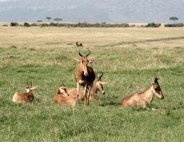 Tansania-Safari-Informationen
