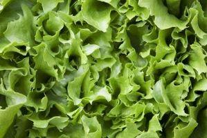 Buffet-Salat-Ideen