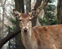 Orte zum Hirsch Jagd in Ost-Tennessee