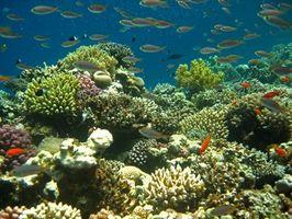 Faktoren, die Korallenriffe