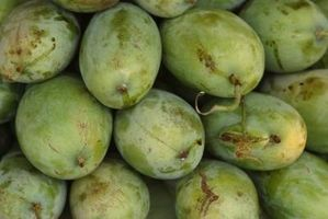 Verwendungsmöglichkeiten für Mango Butter