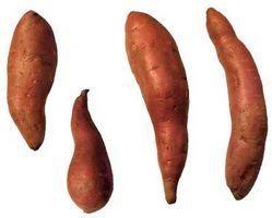 Der Prozess der Zuckerproduktion aus Kartoffeln